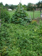 Doras Bauerngarten in Hainert - Kürbispyramide