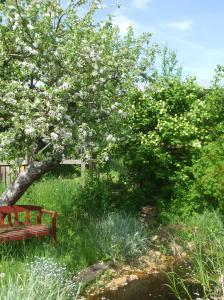 Apfelbaum mit zweierlei Sorten