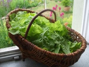 Gartenmelde