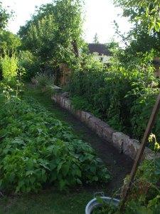 Außer den Tomaten im Hof haben wir auch im Garten noch Tomaten leicht erhöht an die Sandsteinmauer gepflanzt. Petersilie oder Basilikum zu Füssen passt den Tomaten gut!