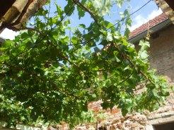 Weinlaube