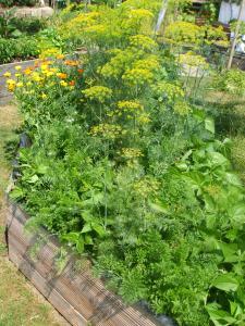 Möhren, Dill, Bohnen und Neuseeländer Spinat