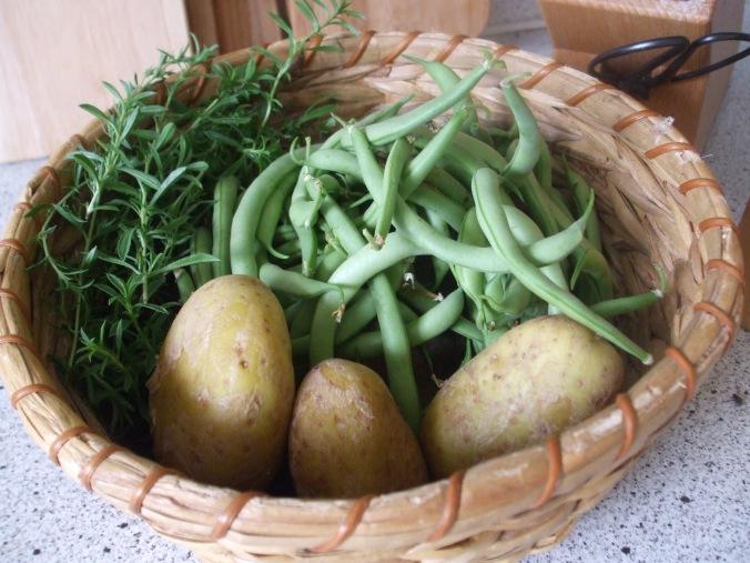 Buschbohnen, Kartoffeln und Bohnenkraut