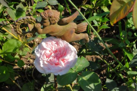 Rosa borbonica 'Souvenir de la Malmaison'