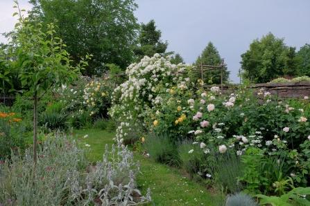 Ramblerrose 'Christine-Hélène' gibt den Ton an
