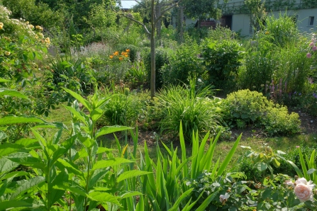 Taglilien, Euphorbia, Bergenia und Alchemilla in Sorten