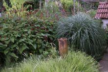 """Carex, Miscanthus sinensis """"Yakushima Dwarf"""""""